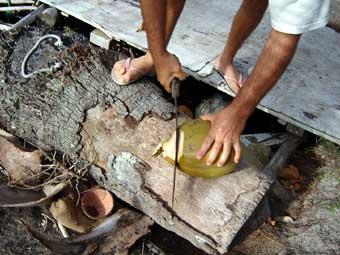 Couper Noix De Coco les cocos